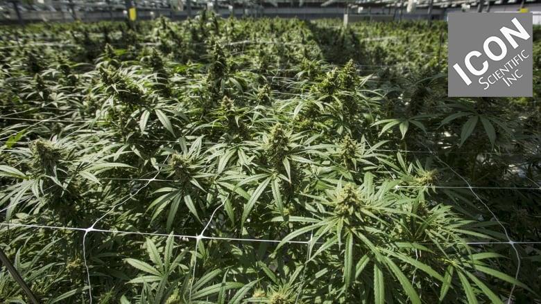 The ANSER™ Cannabis & Hemp Analyzer - Icon Scientific Inc
